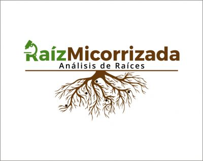 Raíz Micorrizada